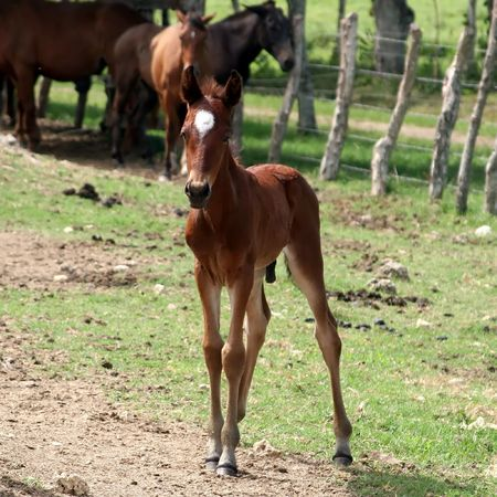 Foal in front of a group of horses  Stock Photo - 2814250