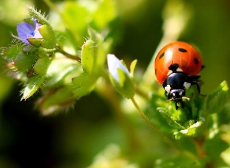 Colorful ladybug crawling on a plant Stock Photo