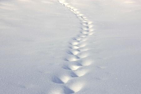 deep powder snow: Tracks in the powder snow Stock Photo