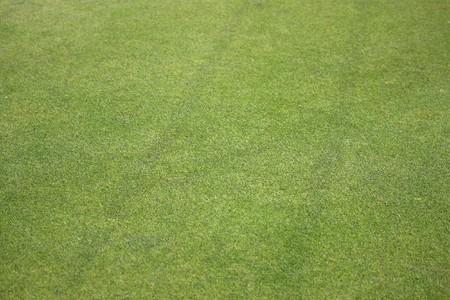 Green grass texture from a golf green  Stock Photo