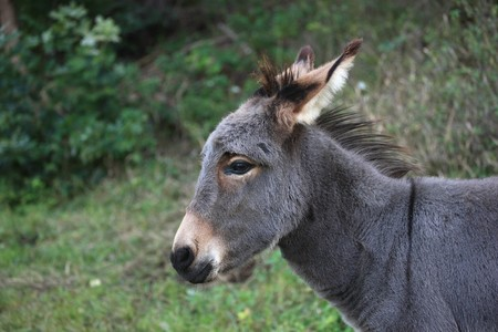 Portrait of a young gray donkey Stock Photo