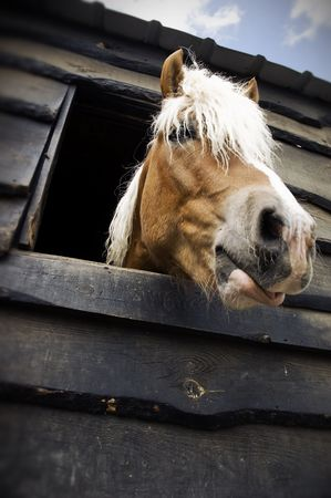 Horse in a stable. Stock Photo - 2815379