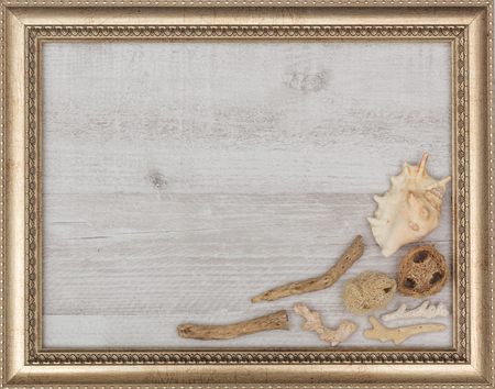 gilded: gilded picture frame with shells inside, closeup