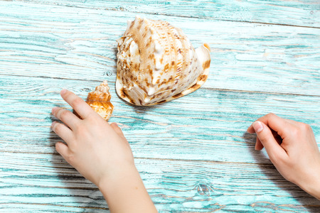 women's hands: seashells in womens hands, view from above Stock Photo