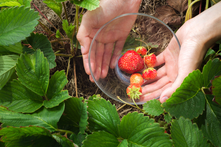 womans hands: womans hands holding a glass bowl of strawberries