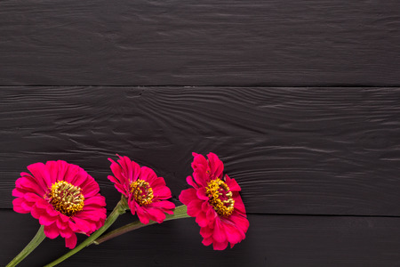 black boards: frame of flowers, background black boards, copyspace Stock Photo