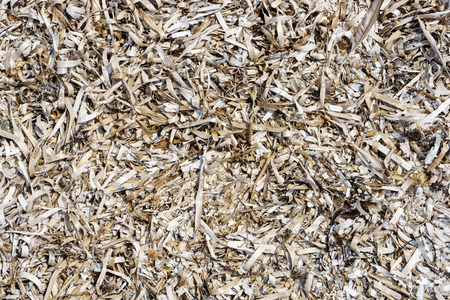 texture of dry grass close up