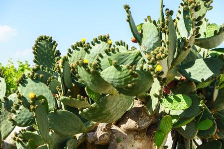 cactus on blue sky background close up