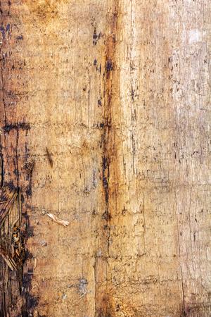 texture of old wood Standard-Bild