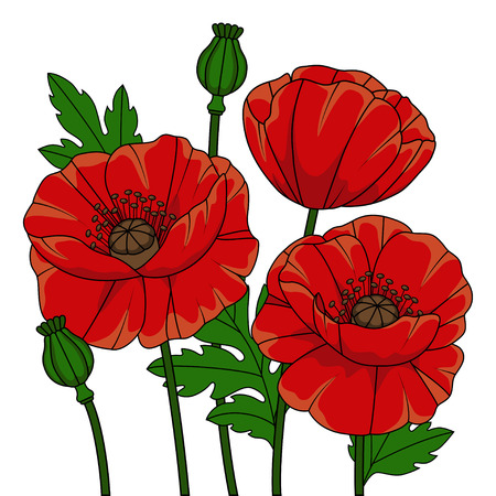 fragrant: Poppies flowers on a white background
