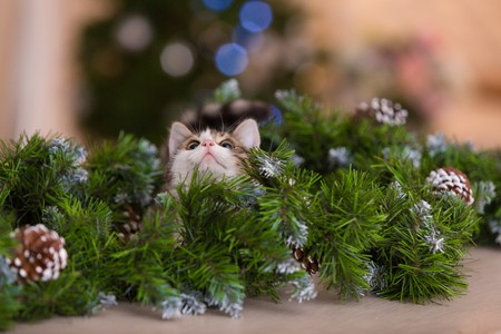 new year cat: the little cat plays at a New Year tree Stock Photo