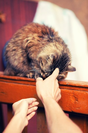 caresses: the hand of the person caresses a fluffy street cat