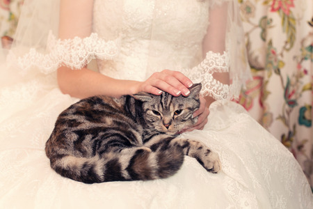 tabby cat in the hands of the brides wedding day