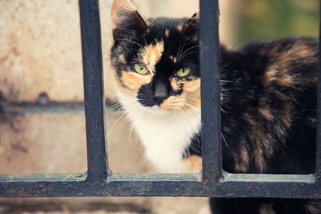 behind bars: Experienced stray red cat behind bars fence