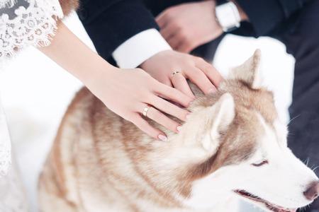 La novia y el novio en el Parque de invierno. Recién casados ??acarician a un perro en el día de la boda de invierno Foto de archivo