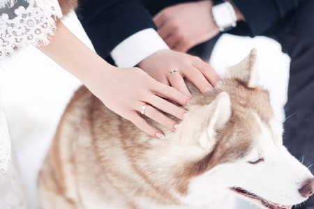 The bride and groom in winter Park. Newlyweds caress a dog in the winter wedding day