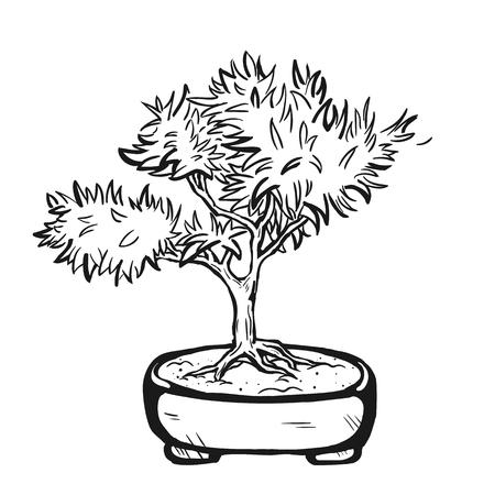 Handdrawn dekorative asiatische Bonsai-Baum in den Topf mit verzweigten Stamm. Standard-Bild - 64302271