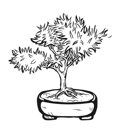 Handdrawn decorative asian bonsai tree in the pot with branched trunk. Illustration