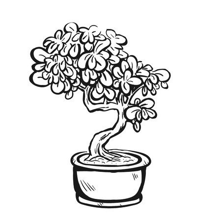 Handdrawn decorative asian bonsai tree in the pot with curved trunk and evergreen foliage.