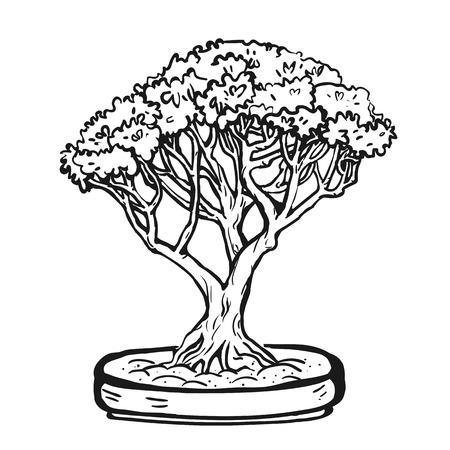 Handdrawn decorative asian bonsai tree in the pot with multitrunk.