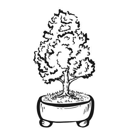 Handdrawn dekorative asiatische Bonsai-Baum in den Topf mit geraden Stamm. Standard-Bild - 64303037