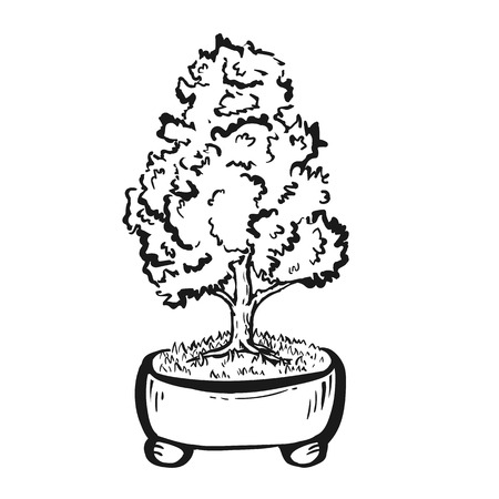 Handdrawn decorative asian bonsai tree in the pot with straight trunk. Illustration