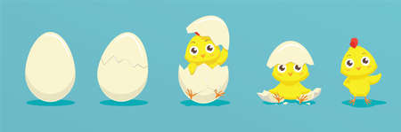 Chicken hatching from the egg. Cartoon baby chick birthday step-by-step process. Funny and educational illustration for kids