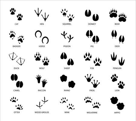 Animals footprints. Animal feet silhouette. Wild animals paw walking track or footprint tracks. Vecteurs