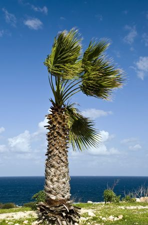 palm in the wind - on the sea Stock Photo - 2086372