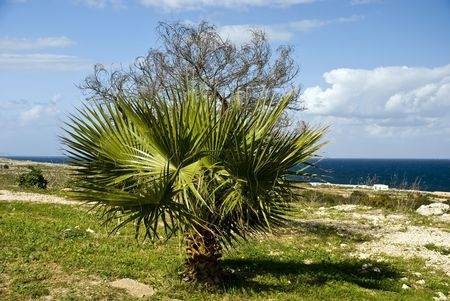 palm in the wind - on the sea Stock Photo - 2086375