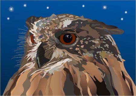 imaginativeness: owl in the night Illustration