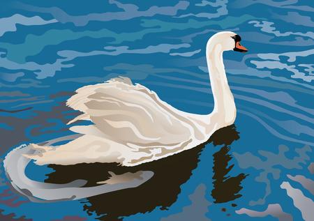 Swan on the lake Vector