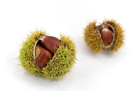edible, ripe chestnuts Stock Photo - 3624741