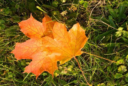 Golden Leaves In The Sunshine . Autumnal Scene Stock Photo - 3636311