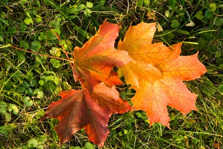 Golden Leaves In The Sunshine . Autumnal Scene Stock Photo - 3636312