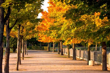 Colorful Autumnal Trees In The Park ,With Footpath Stock Photo - 3636313