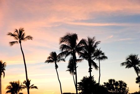 warmly: Palm silhouette on the sunset with warmly clouds Stock Photo