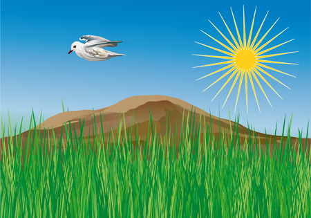 Vector Illustration - Spring On The Meadow With Seagull Flying Vector