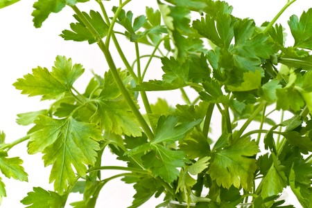celery root: Celery Root Isolated on White