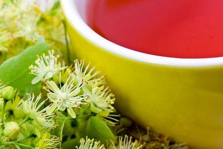 tilia: Fresh Tea of lime blossom - Tilia platyphyllos