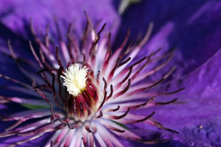 beautiful blue iris flower Stock Photo - 5312285
