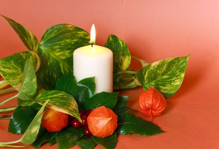chinese holly: hristmas decoration with holly leaves and berries