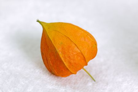 alkekengi: Chinese Lanterns, Physalis alkekengi Stock Photo