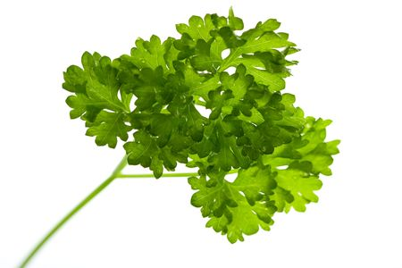 Parsley,isolated on White Stock Photo - 5539053