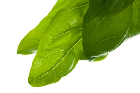 Basil Leaves,isolated on white Stock Photo - 5539117