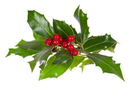 christmas decoration with holly leaves and berries,isolated on white Stock Photo