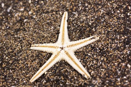 grand strand:  Sea star in the sand Stock Photo