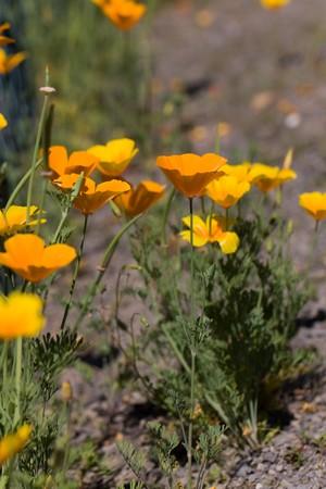 Closeup photo of yellow daisy-field flowers  photo