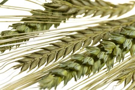 fascicle: barley and wheat corn, close up shot Stock Photo