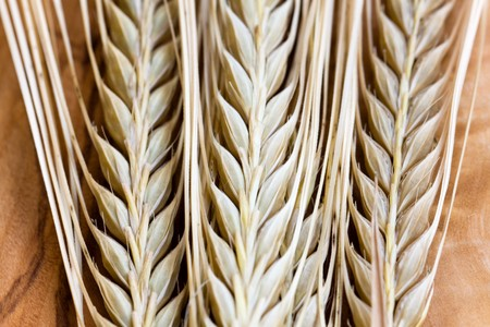 fascicle: Beauty in nature,ripe ear of wheat